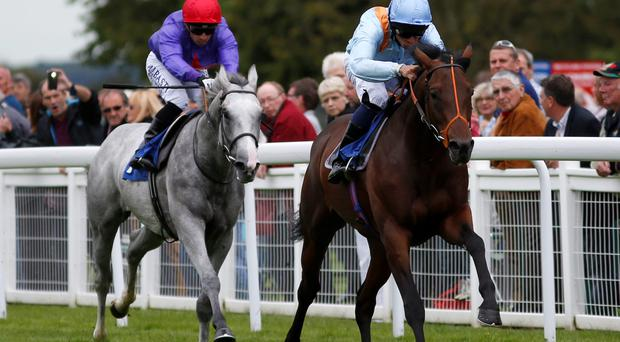 Storm force: Ventura Storm (right), with Sean Levey on board, wins the Whitsbury Stud Stakes yesterday at Salisbury