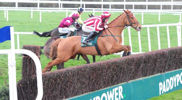 Zabana takes well to fences