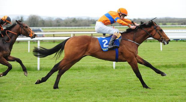 Ambiguity makes a bright start at Tipperary