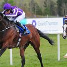 Bondi Beach wins well at Limerick
