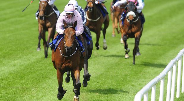 Now Or Never is far too good at Leopardstown