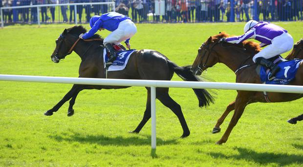 Moonlight Magic isn't for catching in the Derrinstown
