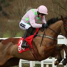 Among the horses that Dr John Waldron bred was the famous Faugheen, who won the Champion Hurdle at Cheltenham in 2015