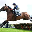 Pyromaniac can run in the Guinness Galway Hurdle on Thursday