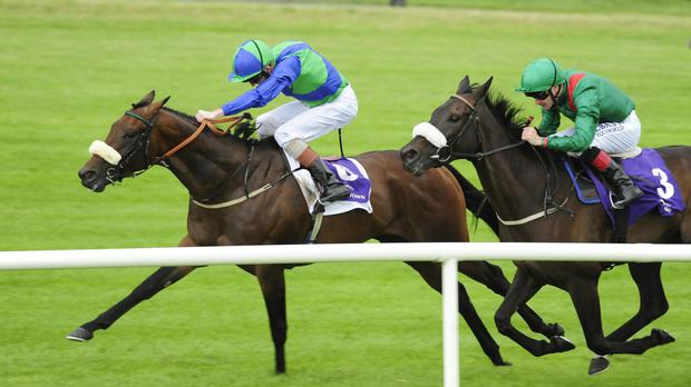 Stellar Mass prevails at Leopardstown
