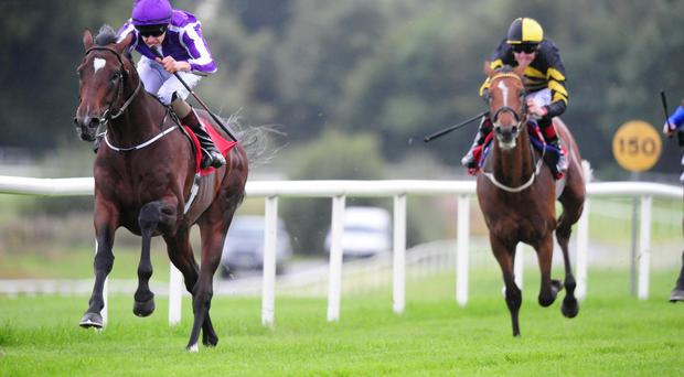Tree Of Knowledge wins at Gowran
