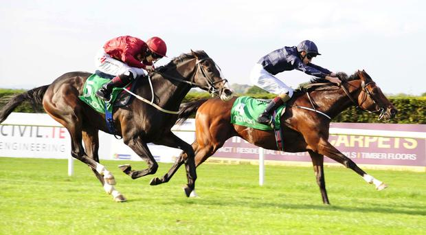 Finn McCool hangs on at Navan