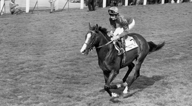 Shergar with Walter Swinburn in the saddle