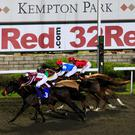 Favourite's change: Sandro Botticelli goes in the 32Red Conditions Stakes at Kempton tonight (stock pic)