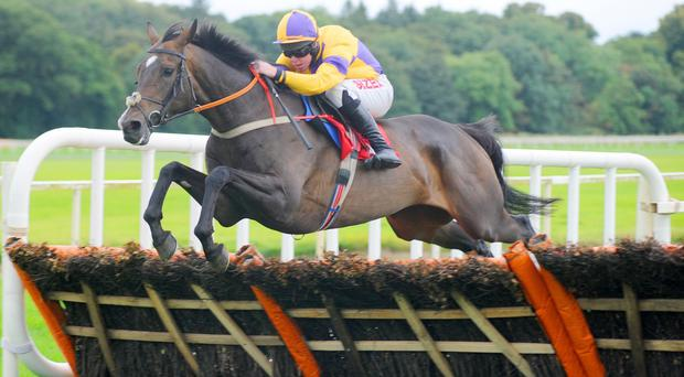 Derrylin trainer David Christie believes Darwins Fox is by far the best horse he has sent to Aintree to date. Photo: Healy Racing