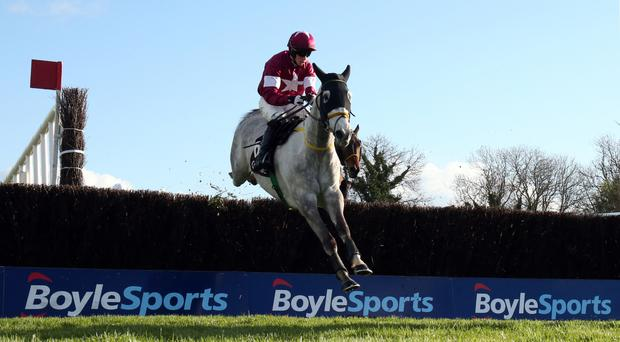 Disko is impressive at Punchestown
