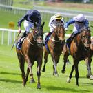 Acapulco (dark blue) wins at the Curragh