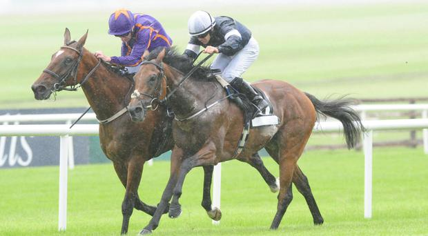 Rekindling serves it up to Wicklow Brave