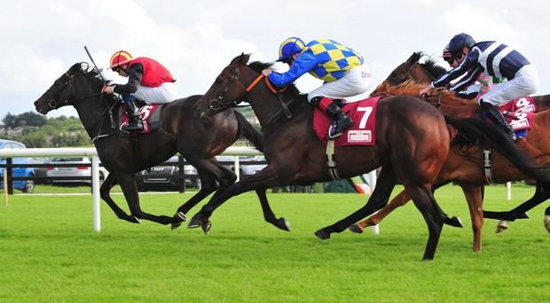 Spiorad Saoirse (no 7) comes with his winning run