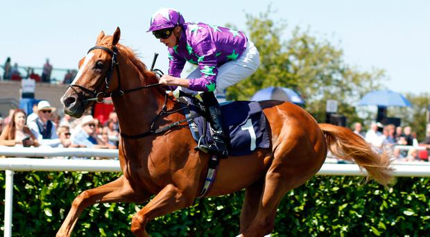Warrior class: Blonde Warrior, pictured with James Doyle in the saddle, can repeat this Doncaster win at Newbury today