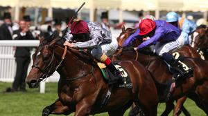 The Wow Signal has been ruled out of the Keeneland Phoenix Stakes