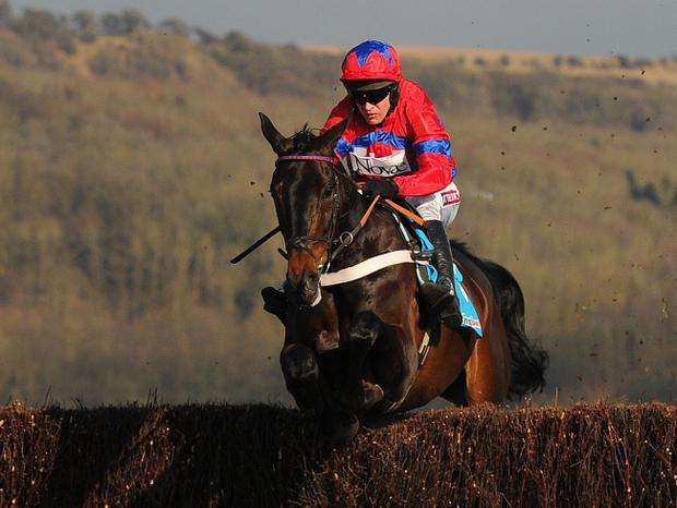 CHELTENHAM, ENGLAND - MARCH 13: Barry Geraghty riding Sprinter Sacre on their way to victory in the Queen Mother Champion Steeple Chase during Ladies Day at Cheltenham Racecourse on March 13, 2013 in Cheltenham, England. (Photo by Michael Regan/Getty Images)