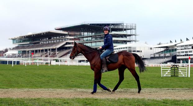 Raring to go: Hurricane Fly on the gallops at Cheltenham yesterday