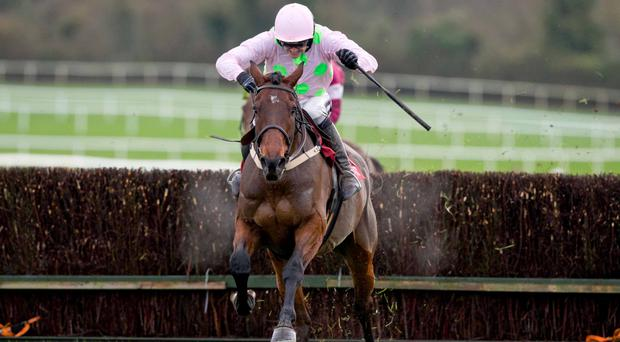 Seconds out: Djakadam can go one better in the Cheltenham Gold Cup after last year's second place
