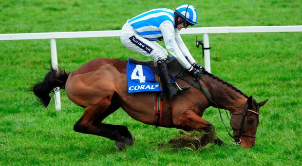 What a comeback: Ulster-owned Killultagh Vic and jockey Ruby Walsh went on to win the 'Money Back On Fallers' At Coral.ie Novice Chase last month at Leopardstown despite this spectacular stumble