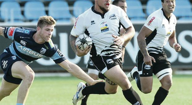 Feeling blue: Zebre's Andrea Manici takes on Cardiff but the Italians went on to lose their first game of the season