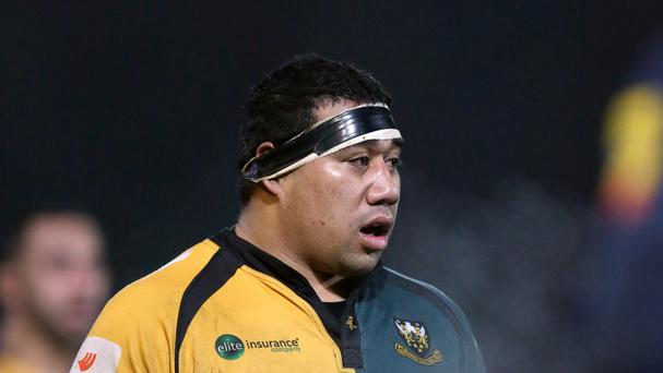 Cardiff Blues have announced the signing of former Northampton prop Salesi Ma'afu