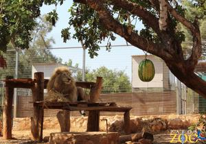Pafos Zoo, Cyprus.  Pictures:Pafos Zoo on Facebook
