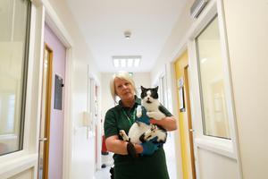 Avril McColm - Cattery Assistant with Kurio the cat at Mid Antrim Animal Sanctuary. Credit: Colm O'Reilly