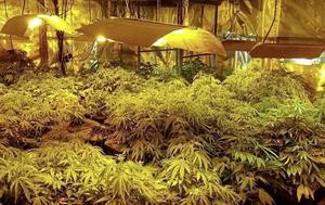 The cannabis farm North Lucas was running on the Ballymagowan Road, Comber.
