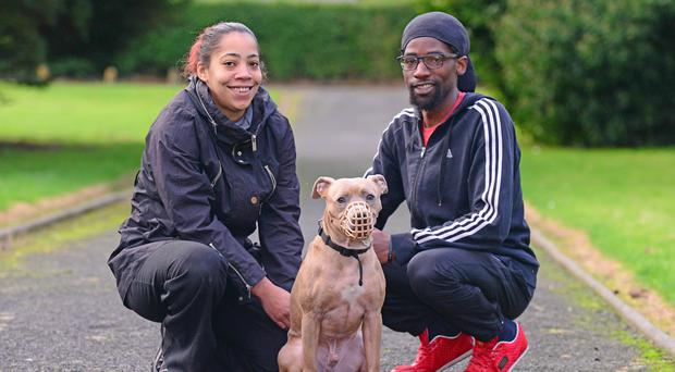 The boxer dog has been returned to its owners.
