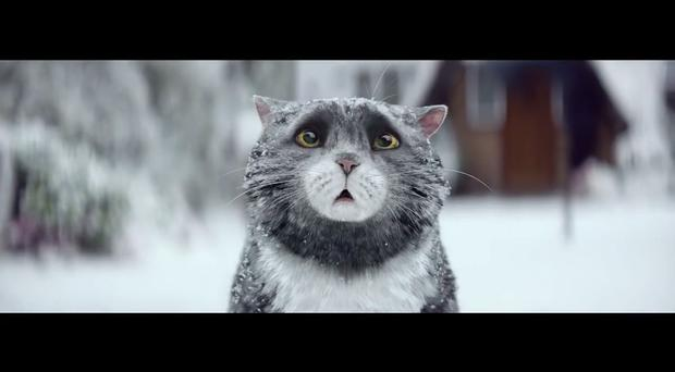 Mog the cat in the Sainsbury's advert